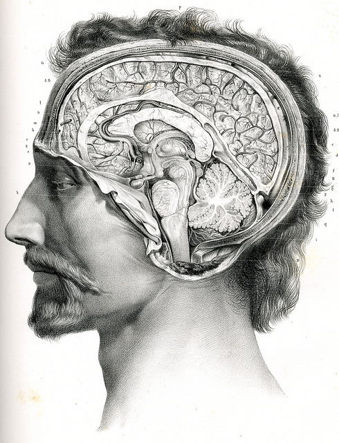 Image in Science and Art