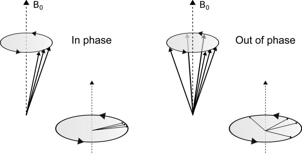 Dephasing of the nuclei.]{Dephasing of the nuclei. Each nucleus precess at a different frequency causing loss of coherence between the spins.