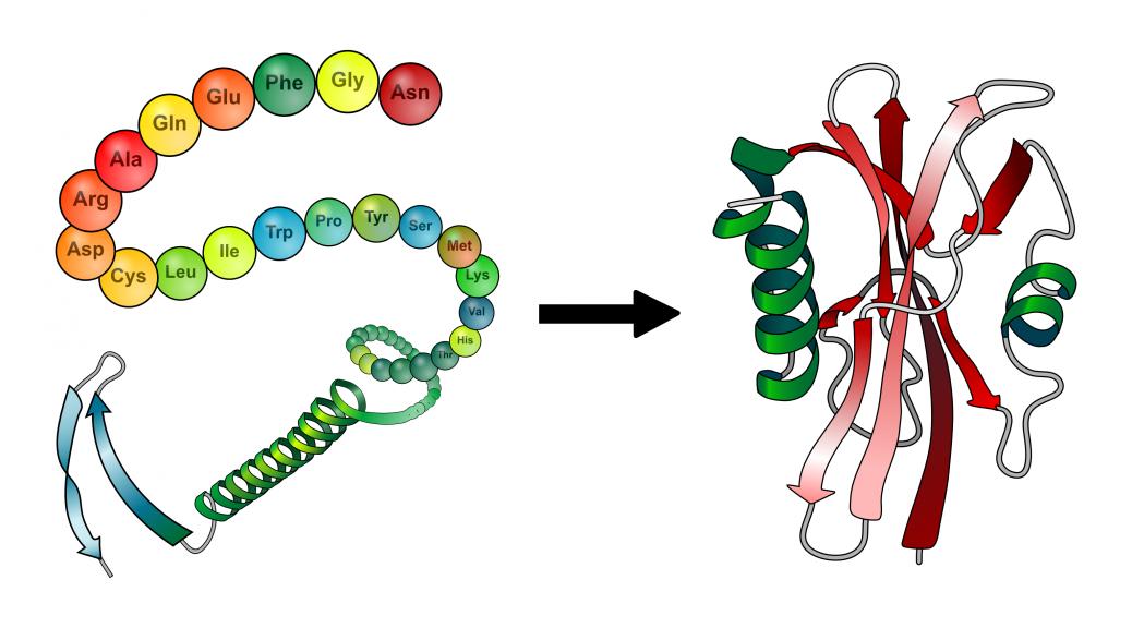 FoldingProteina