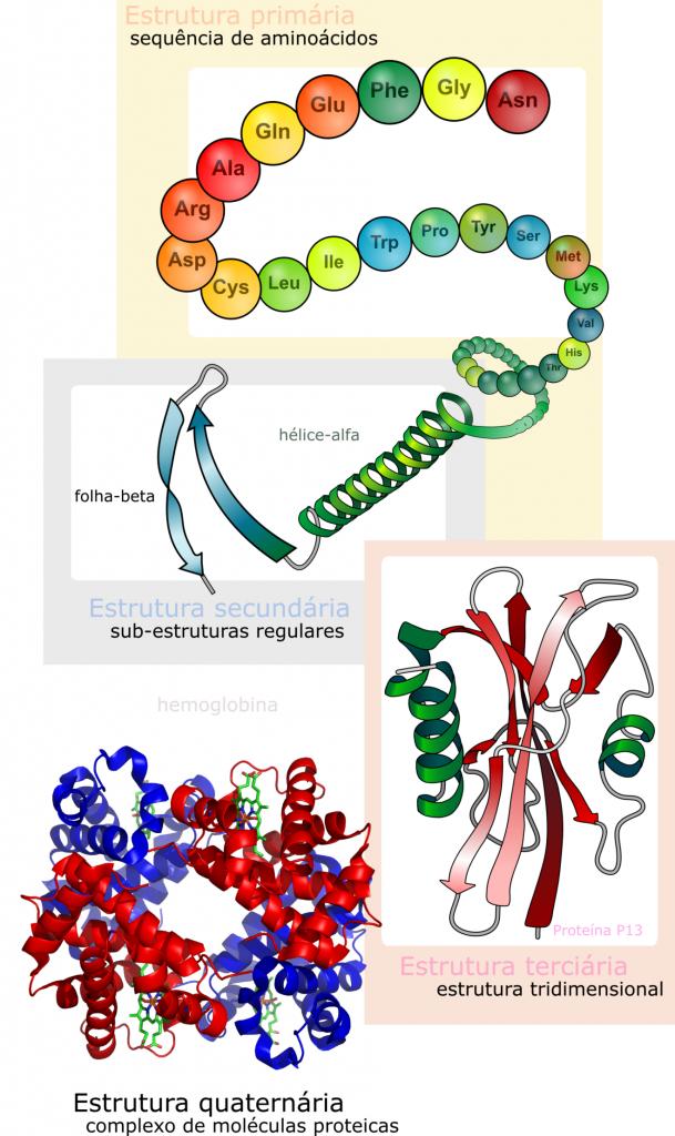 Figura 1. Principais níveis de organização estrutural das proteínas. Esta imagem é um trabalho derivado de: 1. LadyofHats derivative work: Gabby8228 (Main_protein_structure_levels_en.svg) [Public domain], via Wikimedia Commons. *AND* 2. Zephyris at the English language Wikipedia [GFDL (www.gnu.org/copyleft/fdl.html) or CC-BY-SA-3.0 (http://creativecommons.org/licenses/by-sa/3.0/)], via Wikimedia Commons.